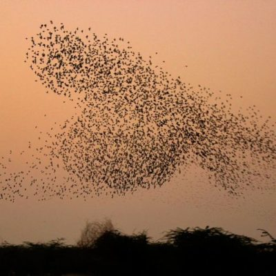 image of a flock of birds flying around at sunset