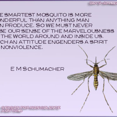 Season of nonviolence quote by the Dali Lama with an image of mosquito